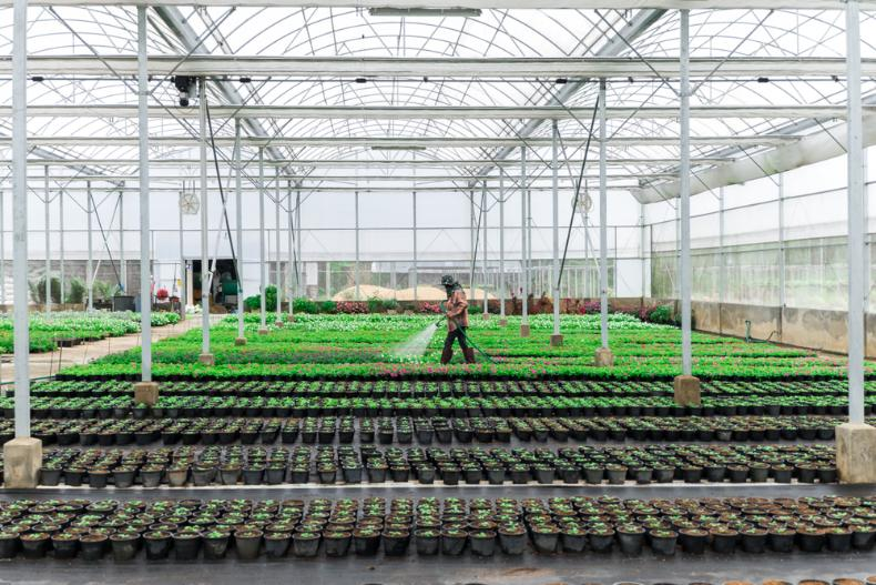 Hydroponics Retailer iPower Sees 4% Stock Drop on Q4 Losses